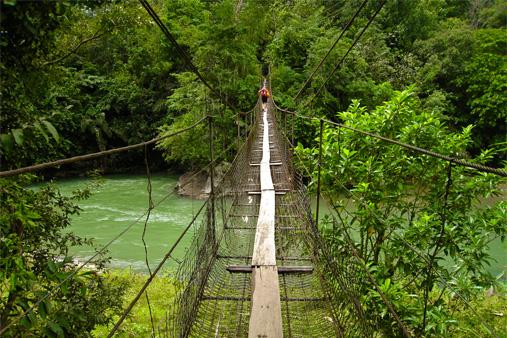 public://images/exec-life-images/2015/01/22/rainforests.jpg