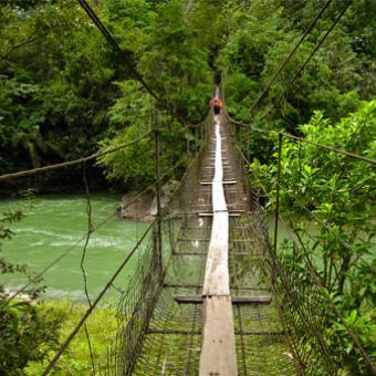 https://www.indiantelevision.com/sites/default/files/styles/340x340/public/images/exec-life-images/2015/01/22/rainforests.jpg?itok=LmmEUX0Q