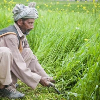 https://www.indiantelevision.com/sites/default/files/styles/340x340/public/images/mam-images/2015/02/11/Afghan_farmer_in_Bamyan.jpg?itok=Bv-vnwWR