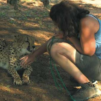 https://www.indiantelevision.com/sites/default/files/styles/340x340/public/images/tv-images/2016/05/05/animal1_0.jpg?itok=CxGaF5ez