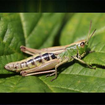 https://www.indiantelevision.com/sites/default/files/styles/340x340/public/images/tv-images/2017/02/06/Grasshoppers_0.jpg?itok=Q3bbp-kD