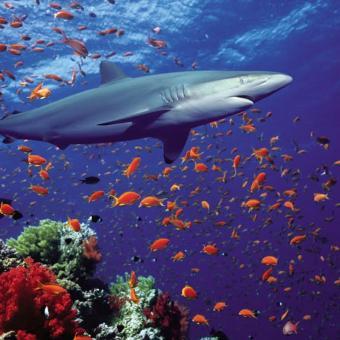 https://www.indiantelevision.com/sites/default/files/styles/340x340/public/images/tv-images/2018/09/03/shark.jpg?itok=vaxs1Q2A