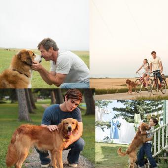 https://www.indiantelevision.com/sites/default/files/styles/340x340/public/images/tv-images/2018/09/04/Dog-Purpose.jpg?itok=FSrUeuv5