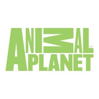 https://www.indiantelevision.com/sites/default/files/styles/340x340/public/images/tv-images/2018/11/14/animal-planet.jpg?itok=GK2QBFXl