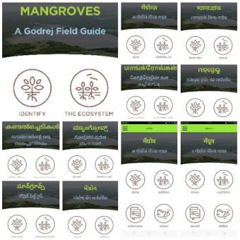 https://www.indiantelevision.com/sites/default/files/styles/340x340/public/images/tv-images/2019/06/06/mangroves.jpg?itok=fcQGosJF