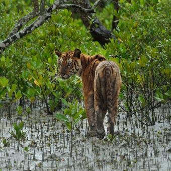 https://www.indiantelevision.com/sites/default/files/styles/340x340/public/images/tv-images/2019/08/20/Tiger.jpg?itok=ViaWrm2v