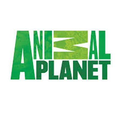 http://www.indiantelevision.com/sites/default/files/styles/smartcrop_800x800/public/images/tv-images/2016/05/11/Animal%20Planet_0.jpg?itok=Eld4D3KC