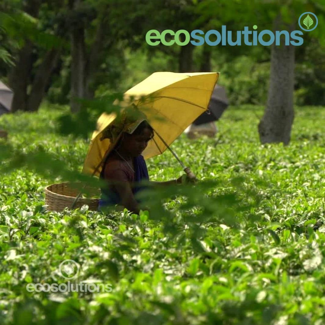 http://www.indiantelevision.com/sites/default/files/styles/smartcrop_800x800/public/images/tv-images/2016/07/29/Eco%20Solutions.jpg?itok=EmYZ_kmw