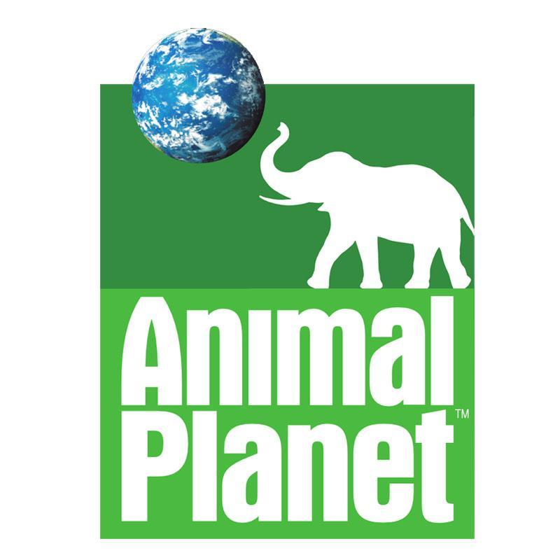 http://www.indiantelevision.com/sites/default/files/styles/smartcrop_800x800/public/images/tv-images/2016/12/21/Animal%20Planet.jpg?itok=CZ9Wm_OR