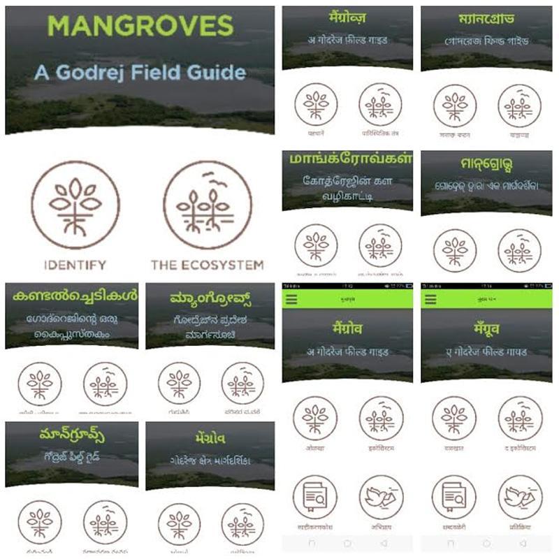 https://www.indiantelevision.com/sites/default/files/styles/smartcrop_800x800/public/images/tv-images/2019/06/06/mangroves.jpg?itok=qgFjkV2x