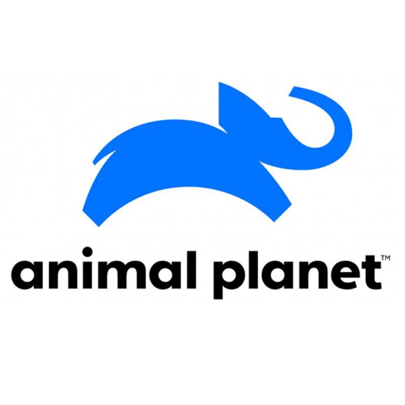 https://www.indiantelevision.com/sites/default/files/styles/smartcrop_800x800/public/images/tv-images/2019/07/15/animal.jpg?itok=PcIk2NEj