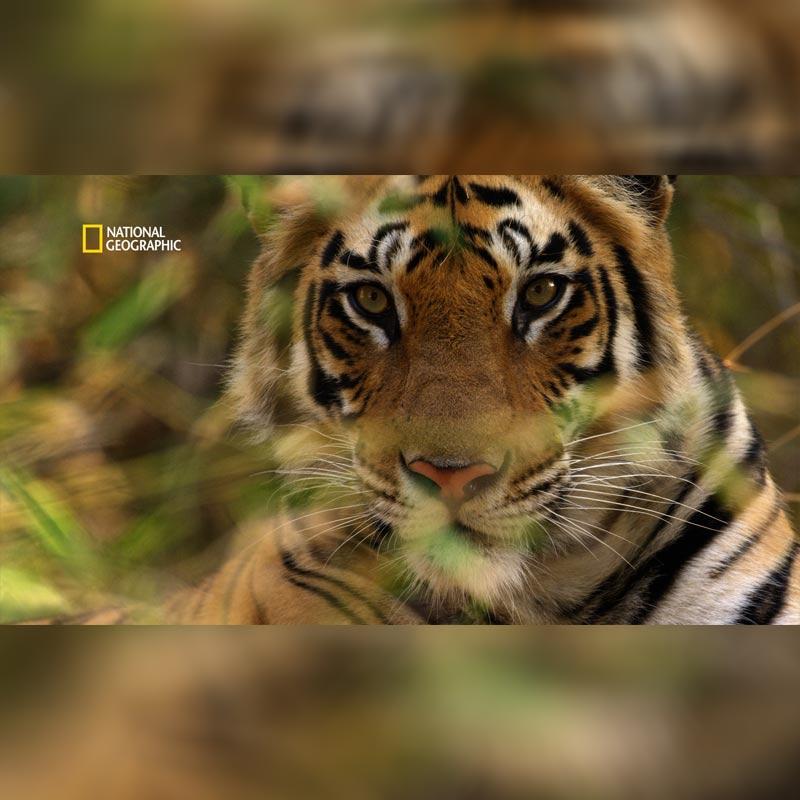 https://www.indiantelevision.com/sites/default/files/styles/smartcrop_800x800/public/images/tv-images/2019/07/29/natgeo.jpg?itok=O1qeQqfE
